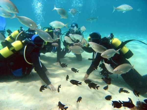Submarinismo-en-canarias